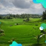 Ubud Rice Fields Walk: 3 of the Best to See Rural Bali
