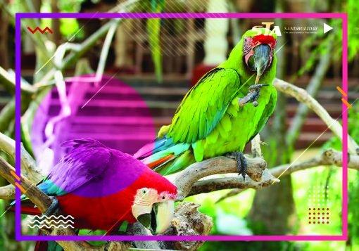 Bali Bird Park Sandholiday