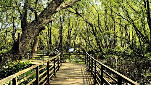 Taman Suaka Margasatwa Muara Angke